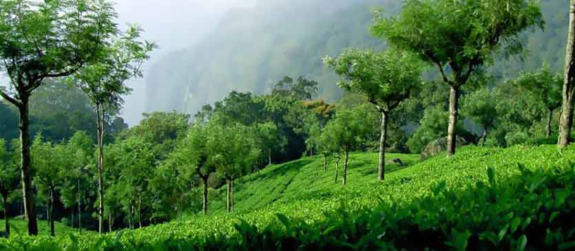 Coonoor - Natures Retreat